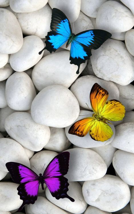 Wallpaper Of Butterfly Wallpaper Of Butterfly Download Butterfly