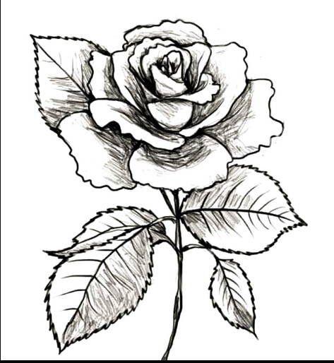 Paling Bagus 16 Gambar Bunga Mawar Hitam Misalkan Saja Bunga Mawar Bunga Tulip Bunga Dahlia Bunga Teratai Bunga Angg Di 2020 Lukisan Bunga Gambar Lucu Seni Inspirasi