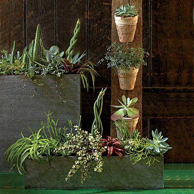 Incredible and Easy Indoor Container Ideas Indoor GardeningGardening TipsContainer
