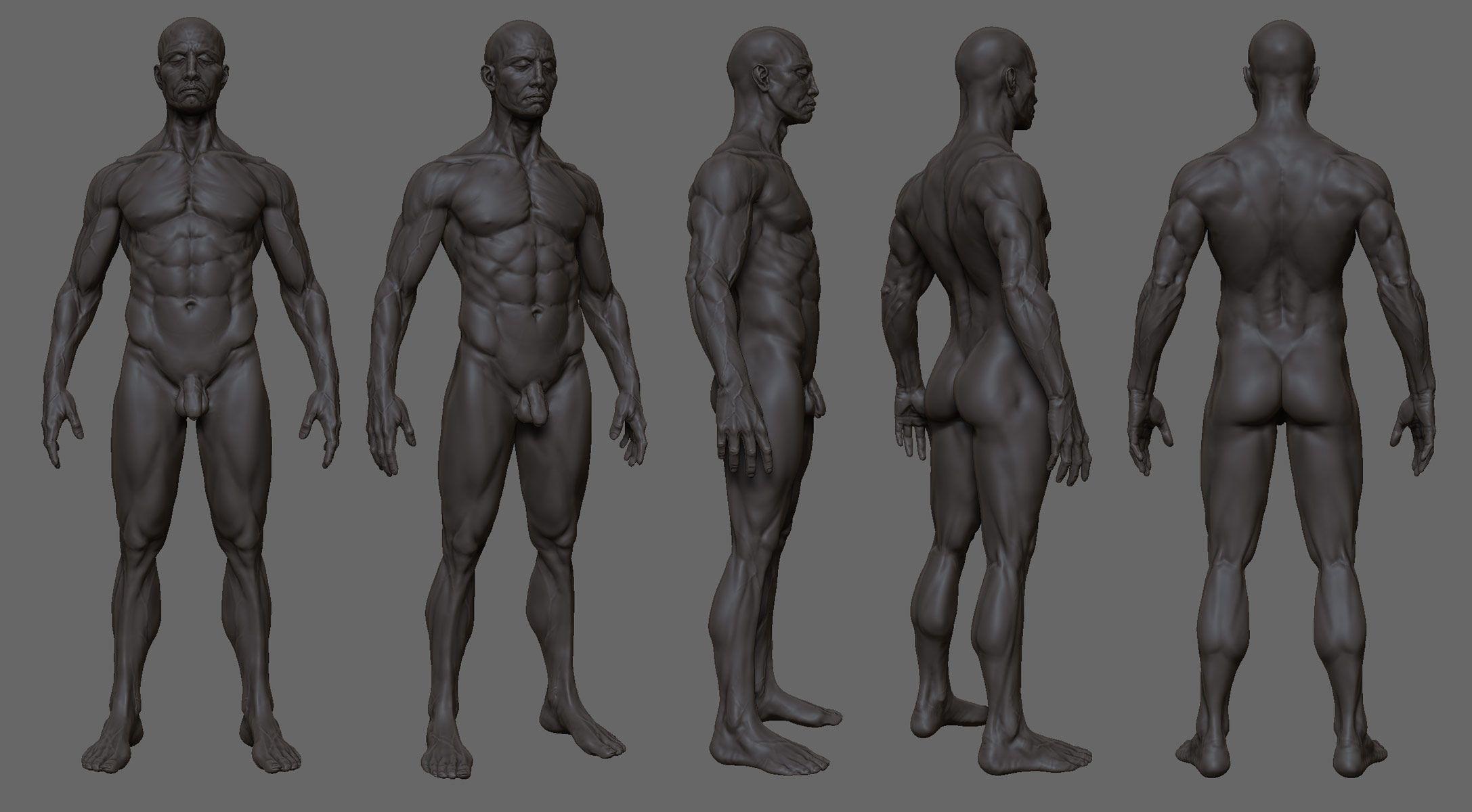 man anatomy - Google-Suche | Illustration & Sketch (Men) | Pinterest ...