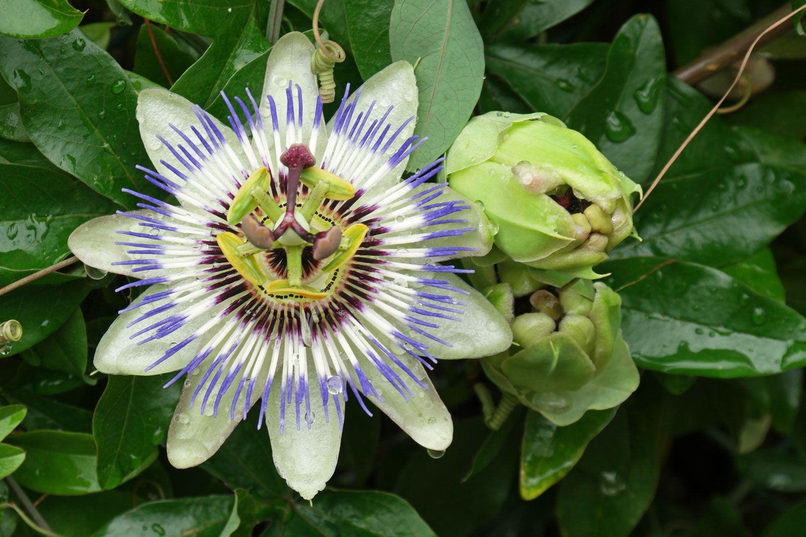 Цветы в доме уход посадка
