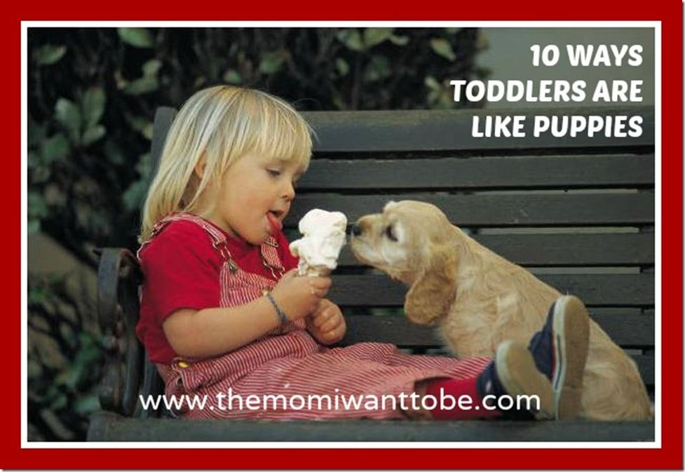 I added 10 tuesday 10 ways my children are like puppies