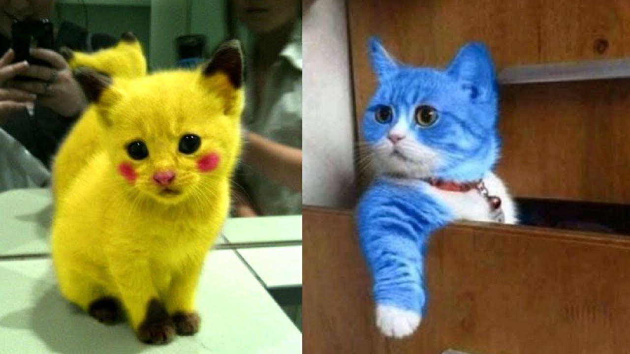 قطط كيوت مضحكة مش هتقدر تغمض عنيك Cute Cats Are Funny You Not Be Able Cute Cat Gif Funny Cute Cats Cute Baby Cats