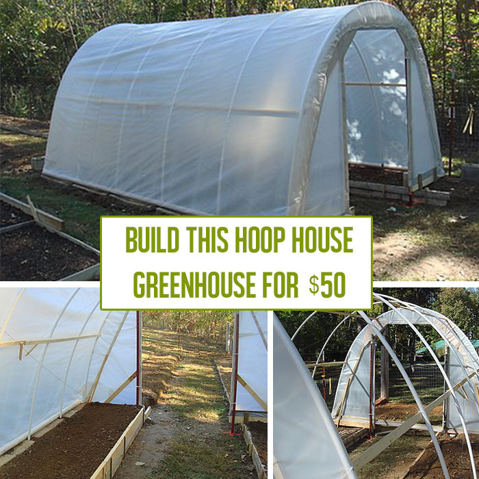 How to Build a Hoop House Greenhouse for $50 is part of Greenhouse plans, Build a greenhouse, Diy greenhouse plans, Diy greenhouse, Greenhouse, Greenhouse growing - We love DIY greenhouse projects that save tons of money  By upcycling some materials, David LaFerney shows how to build a hoop greenhouse for as low as $50!