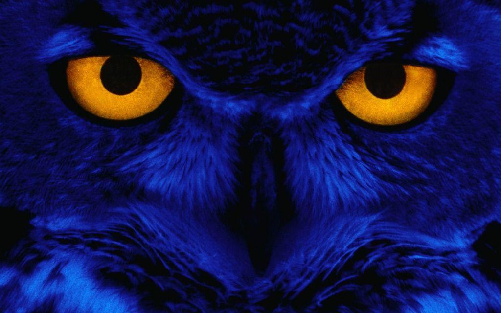 Eerie Autumn Windows 7 Desktop Theme Windowsobserver Com Owl Wallpaper Owl Eyes Halloween Desktop Wallpaper