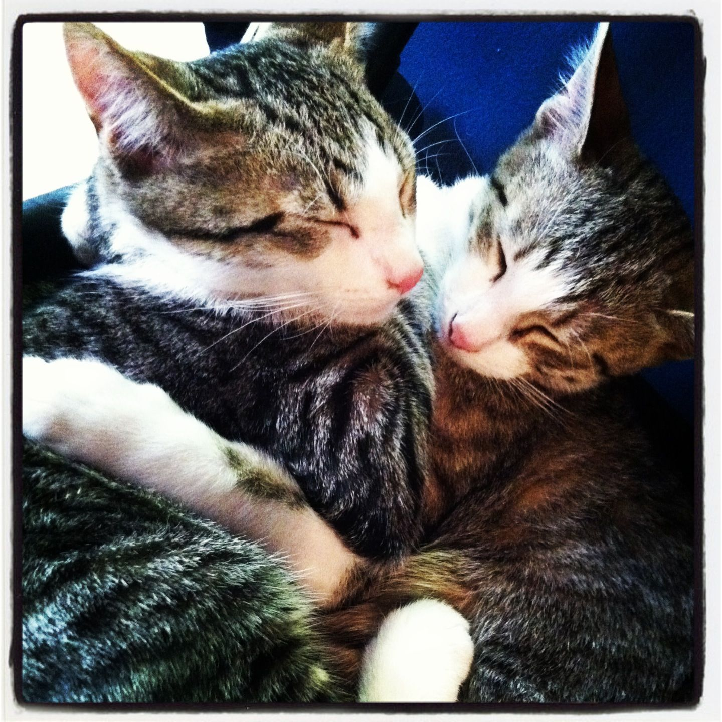 My cute cuddling kitties <3