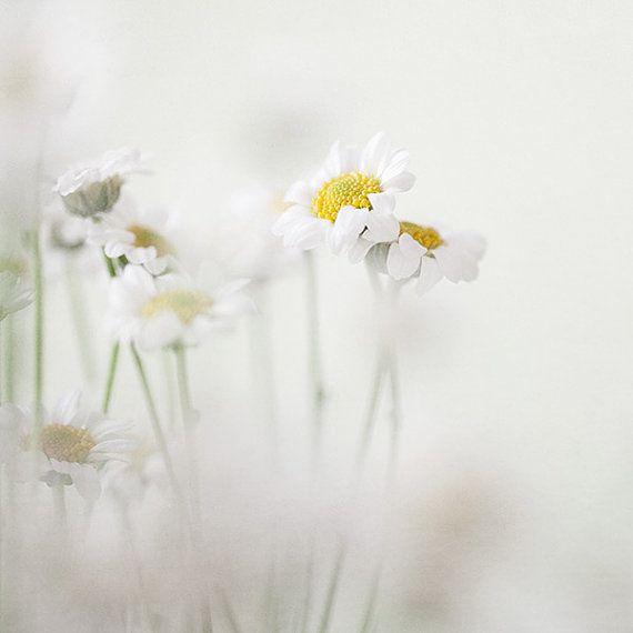 Secret Garden Flower Photography for Her