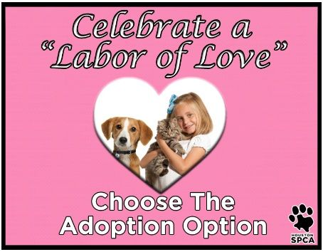 Houston Spca 5 Adoptions Through Monday September 3 To Help