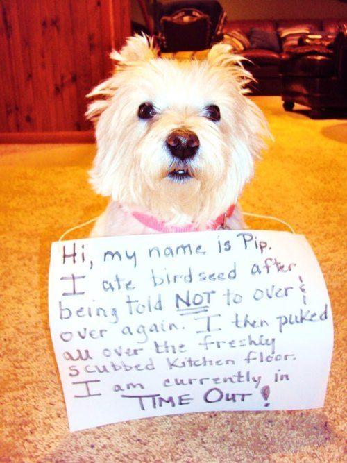 I Am Not A Bird Dog Shaming Funny Dog Shaming Animal Shaming