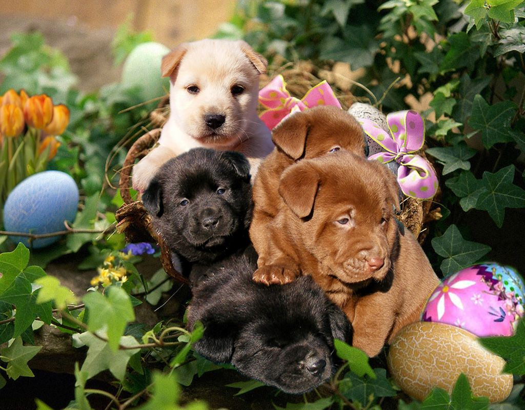 Spring Puppies and Kittens Springtime