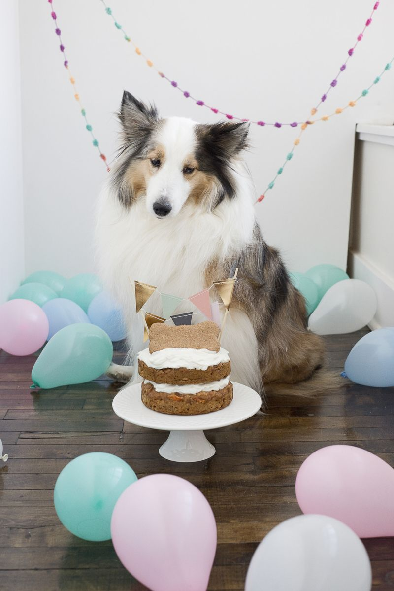 12 Delicious Cake Recipes for Dogs (With images) Dog