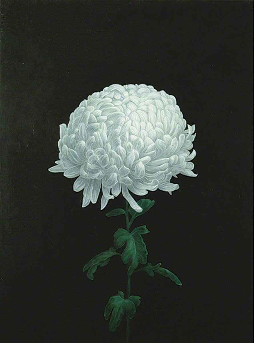 White Chrysanthemum Yasuo Imai B 1965 1997 White Chrysanthemum Chrysanthemum Painting Chrysanthemum