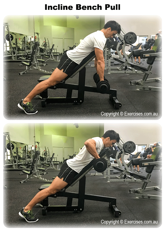 Miraculous Pin On Gym Pabps2019 Chair Design Images Pabps2019Com