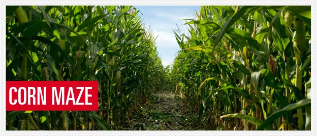 Top 6 Corn Mazes in Chicago