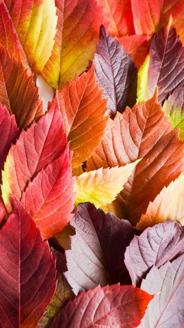 14 iPhone Wallpapers To Fall In Love With Autumn Nature