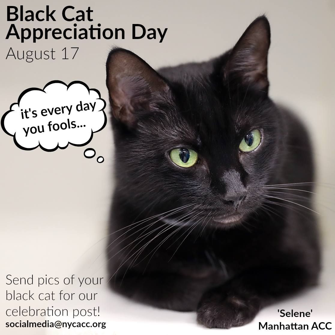 Search Black Cat Appreciation Day Cats Cat Adoption
