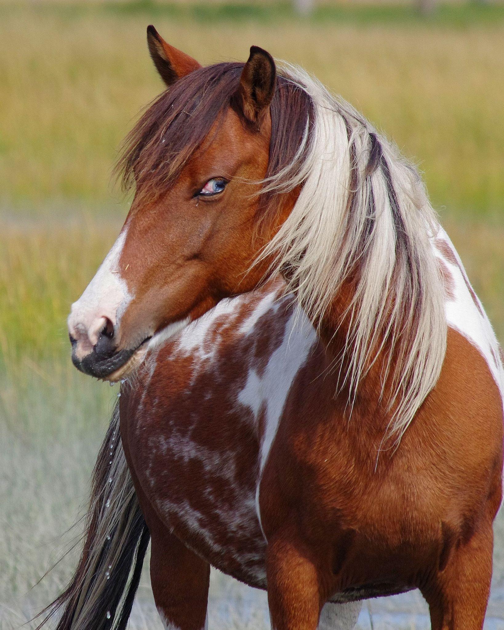 Wild Horses By Gary Schwartzwald On 500px