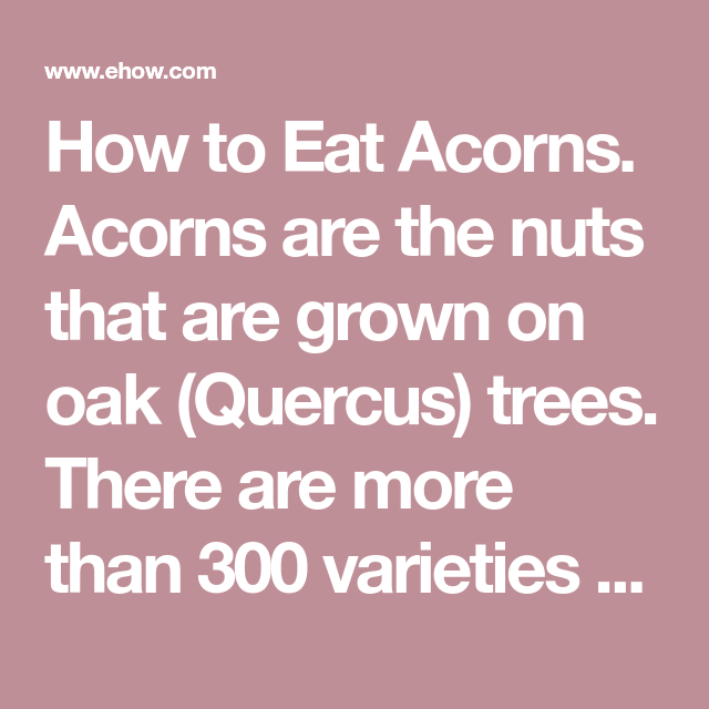 Oak Arbor Grille: How To Eat Acorns