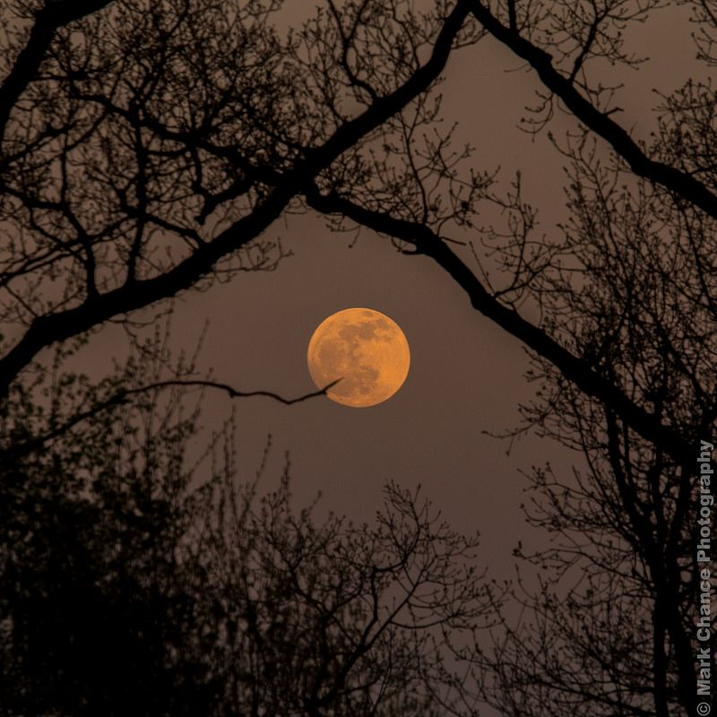 Early Evening Full Moon