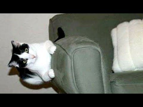 Warning: YOUR STOMACH WILL HURT from LAUGHING TOO HARD - Super FUNNY FAIL compilationCats, dogs, babies, kids and even older people - They all fail sometimes, and when such funny moments get cought on camera, we can all laugh together ... #animals #animalsfunny #animalsquotesfunny #cat #catsanddogs #compilation #cutefunnyanimals #dogcat #DOGS #dogsfunny #funny #funnyanimals #funnyanimalsmemes...