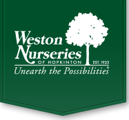 Rhododendron Mrs J A Withington Iii Weston Nurseries Garden Centers Of Ma