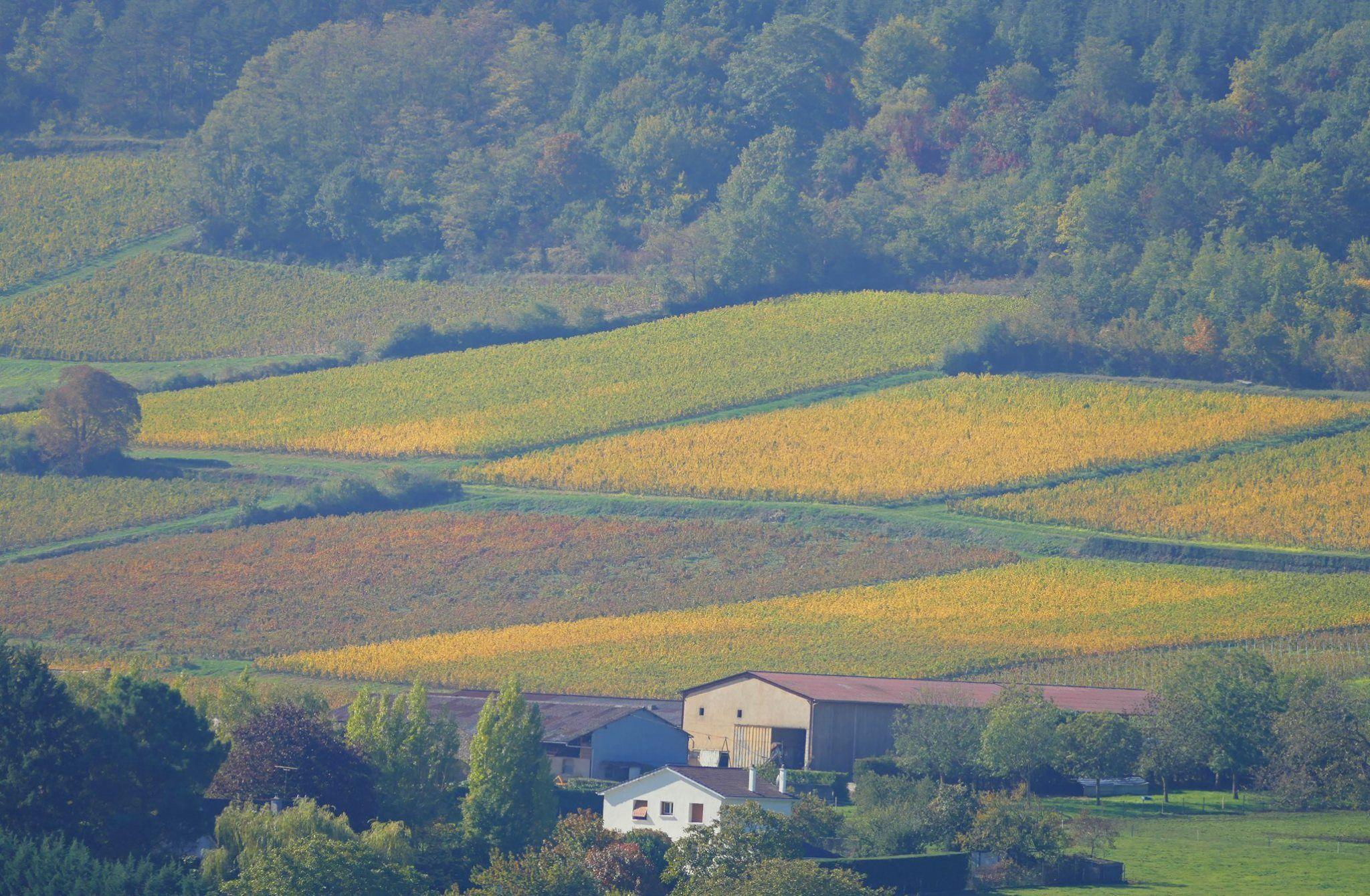 Vignes A Milly Lamartine Oiseaux Des Jardins Paysage Photos