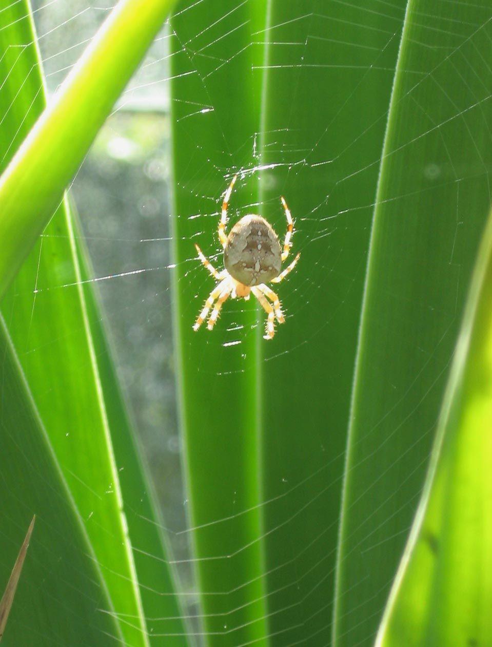 Spider alert! Cae Hir Gardens