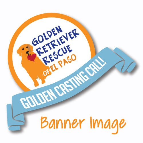 Golden Retriever Rescue Of El Paso Rescuing Stray Abandoned Or Released Golden Retrievers Golden Retriever Rescue Golden Retriever Saving Lives