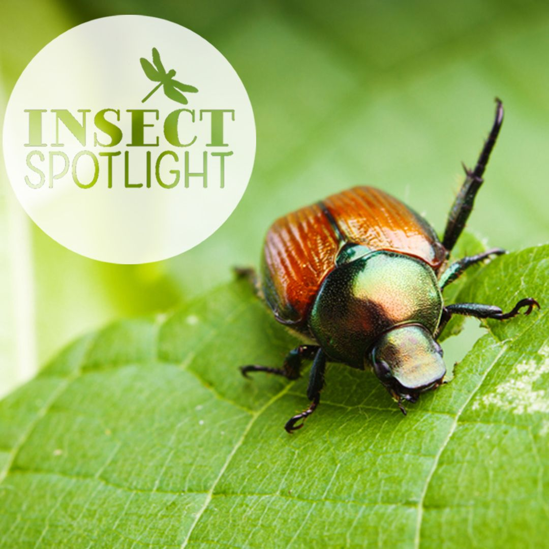 Pin On Insect Spotlight
