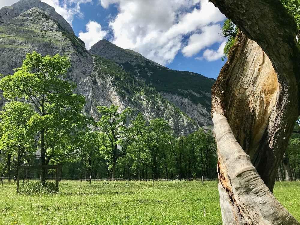 Grosser Ahornboden Im Karwendel Naturdenkmal In Tirol Alpen In
