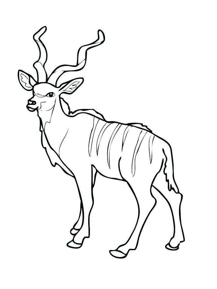 Kudu Antelope Coloring Page Free Printable Coloring Pages