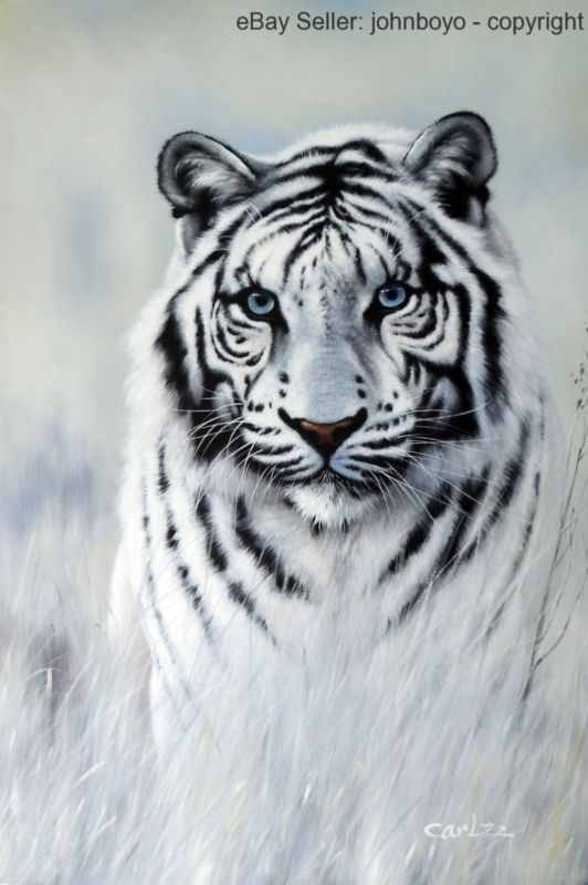 Painting: White Tiger Blue Eyes Big Cat Portrait Endangered Species Stretched Oil Painting https://rover.ebay.com/rover/1/711-53200-19255-0/1?ff3=2&toolid=10044&campid=5337819815&customid=&lgeo=1&vectorid=229466&item=351992788947 (via @zedign)