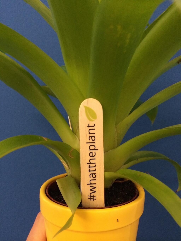 Plant stickers! #whattheplant