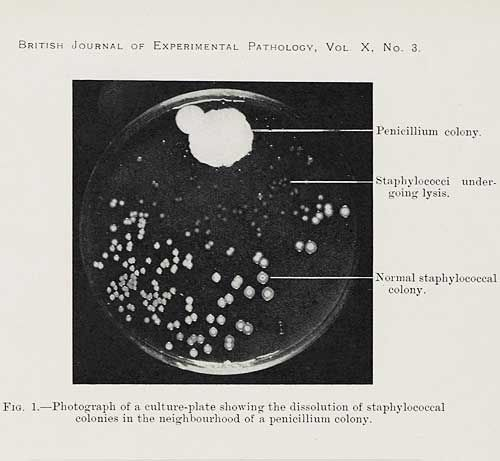 In 1928 Ayrshire Born Pharmacologist Alexander Fleming Discovered