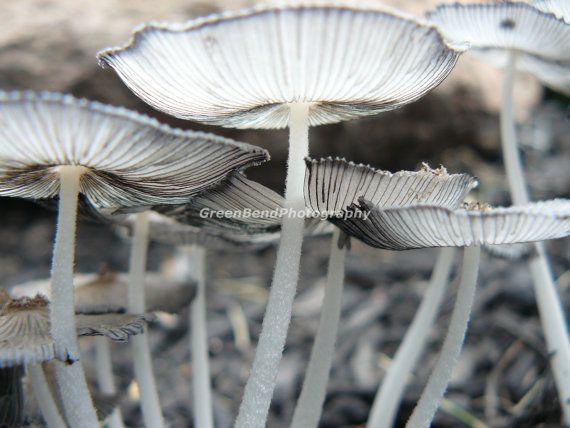 white and grey mushrooms. fine art photography. woodland photography