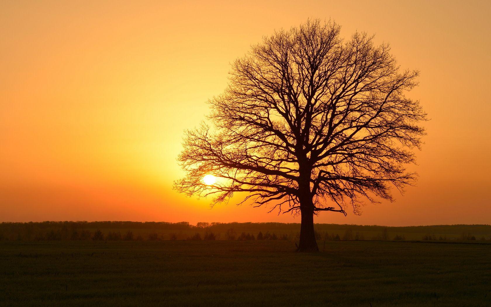 Golden Tree Sunset Sunrise Sunset Hd Wallpaper