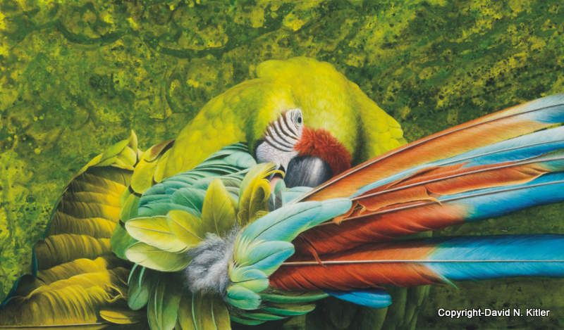 Backgrounds: Preening Green, cropped by David Kitler
