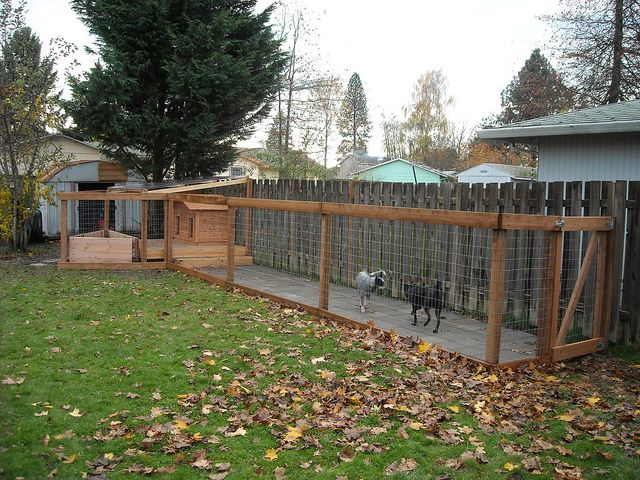 Dog Run Completed With Dogs Added Concrete Pavers