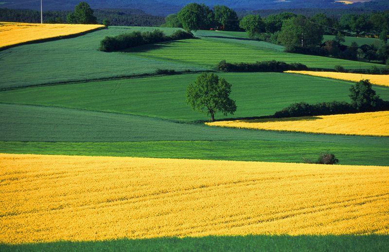 bavarian fields