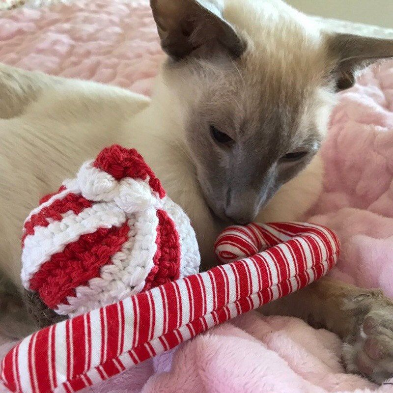 Old Fashioned Candy Cane Organic Catnip Cat Toy With Images Catnip Cat Toy Siamese Cats Munchkin Cat