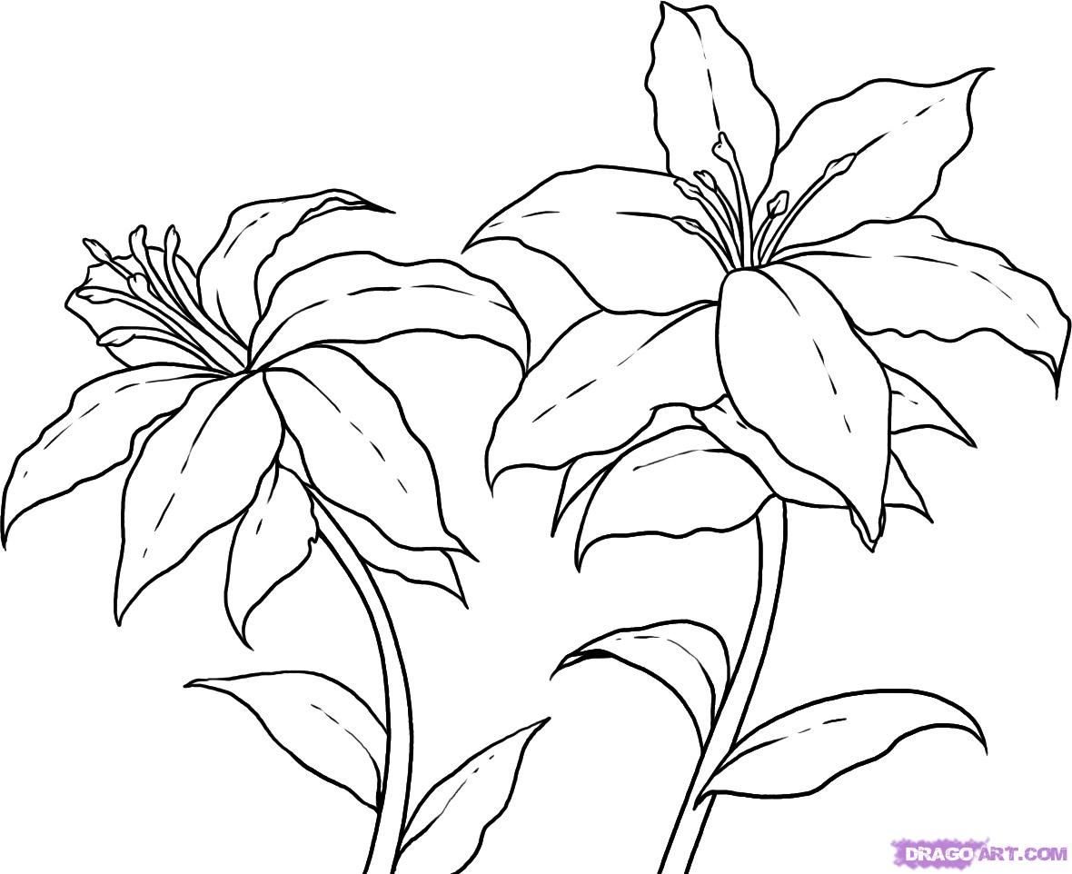 Flower Plant Line Drawing : How to draw lilies step arts pinterest pyrography