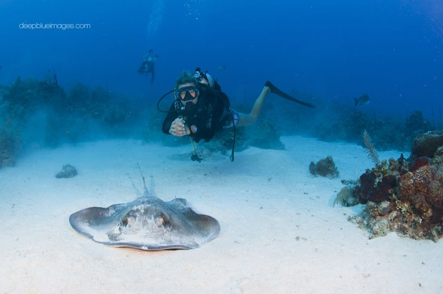 Stingray City With Lobster Pot Dive Center In Grand Cayman Diving Center Diving Grand Cayman