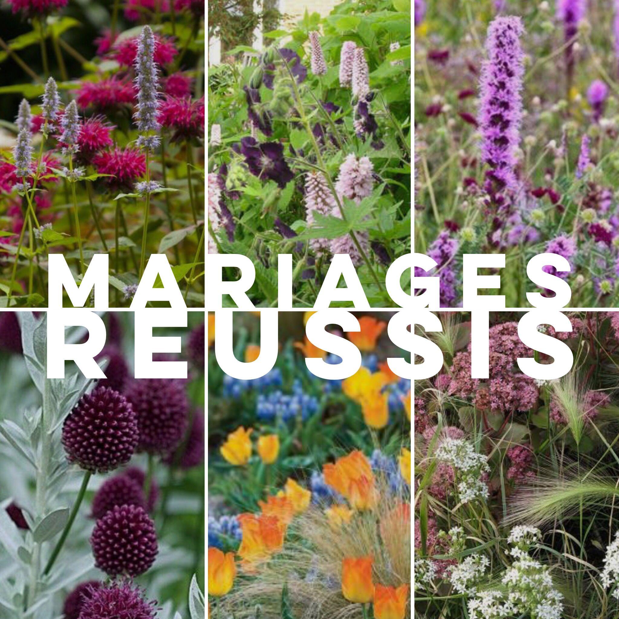 Les meilleures association de plantes vivaces allium for Plantes fleuries vivaces