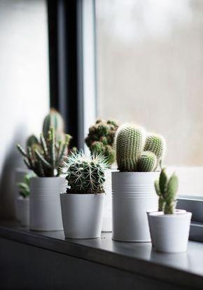 Fensterbank Dekoration Kakteen Pflanzen Zimmerpflanzen