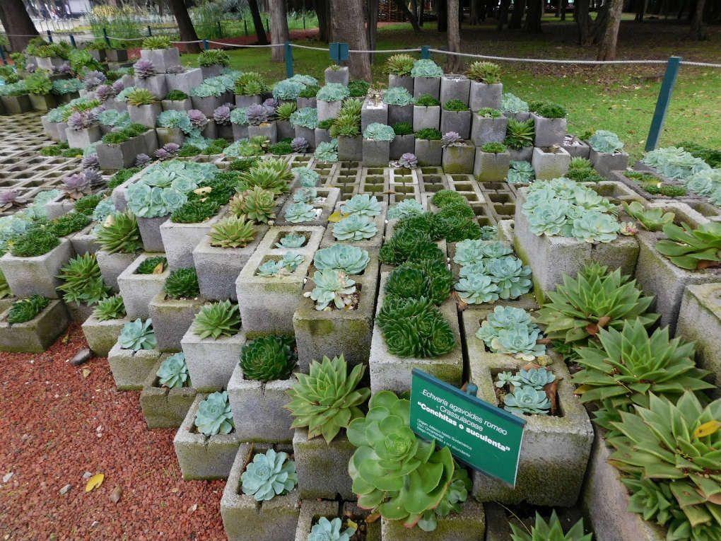 Jard n bot nico bosque de chapultepec jard n bot nico for Como ir al jardin botanico