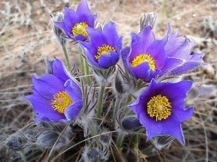 Красивейшие убийцы - цветы опасные для жизни