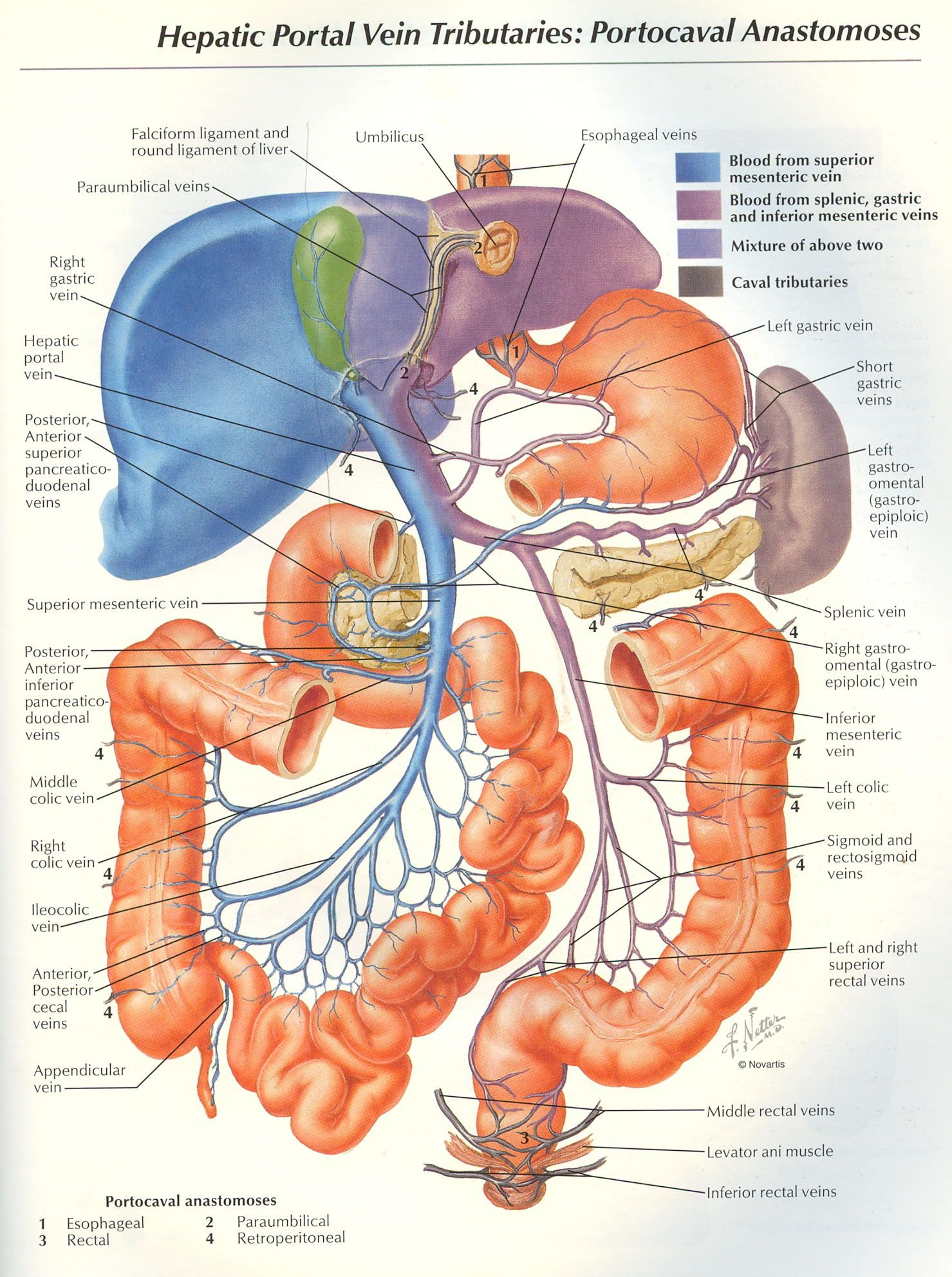 netter images for lymphatic system - Google Search | Anatomy ...