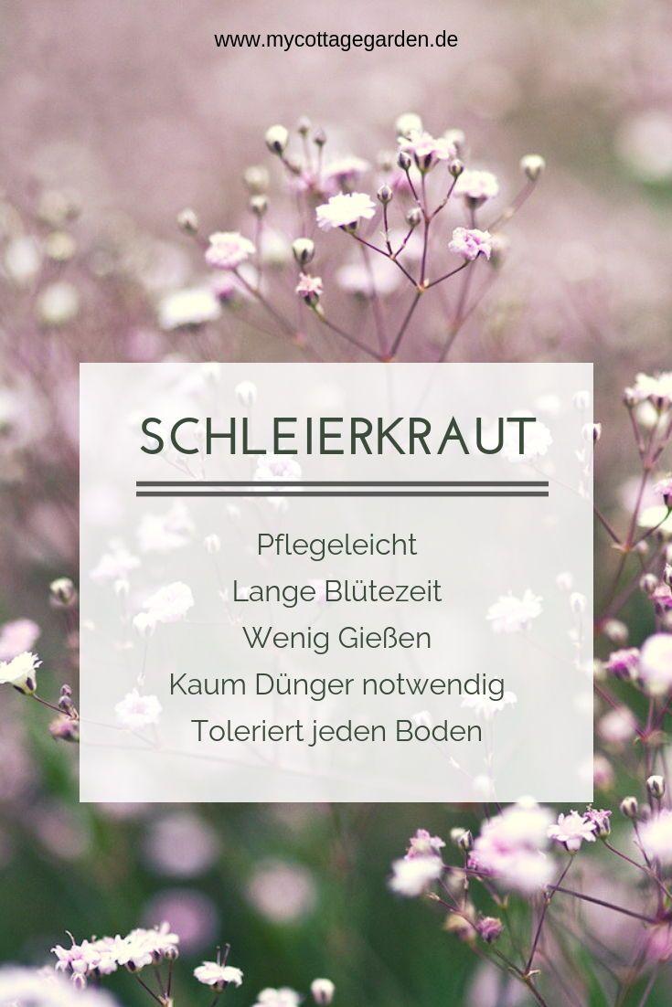 Romantischer Garten: Das kriechende Schleierkraut