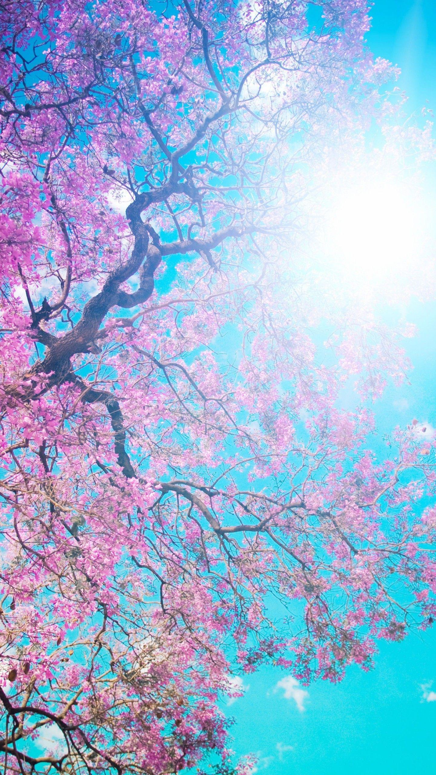 Cool Iphone 7 Top Wallpaper Hd 182 Spring Desktop Wallpaper Spring Wallpaper Nature Wallpaper