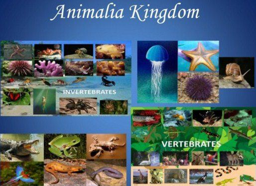 Image of: Mind Kingdom Animalia Pengertian Ciri Dan Klasifikasi Beserta Contohnya Secara Lengkap Http Pinterest Pin By Teja Htc On Bengkelharga Pinterest Science Lessons